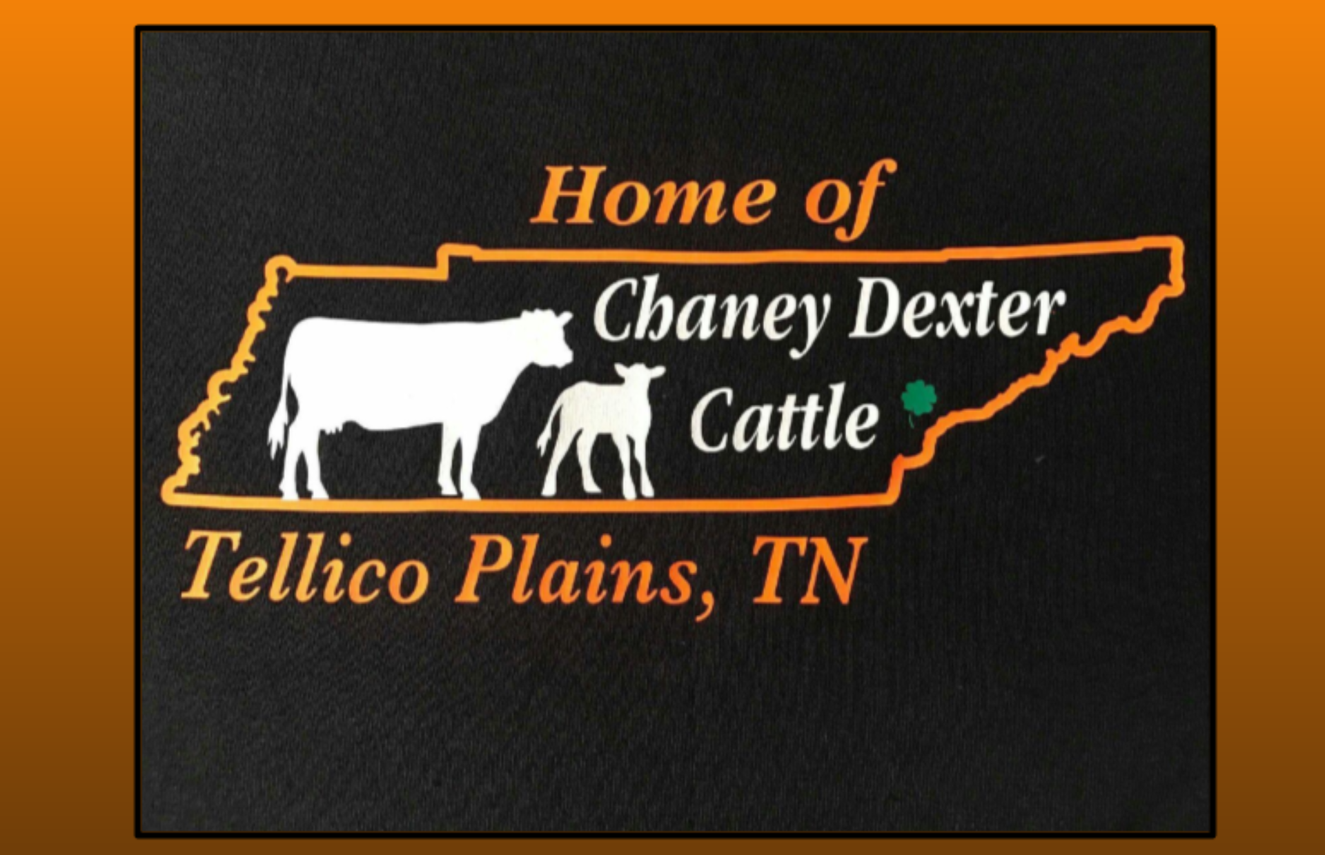 Chaney Registered Dexter Cattle